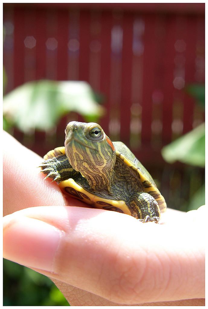 Smug turtle buddy, 2007.