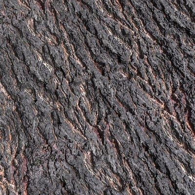 Deciduous Bark Scan