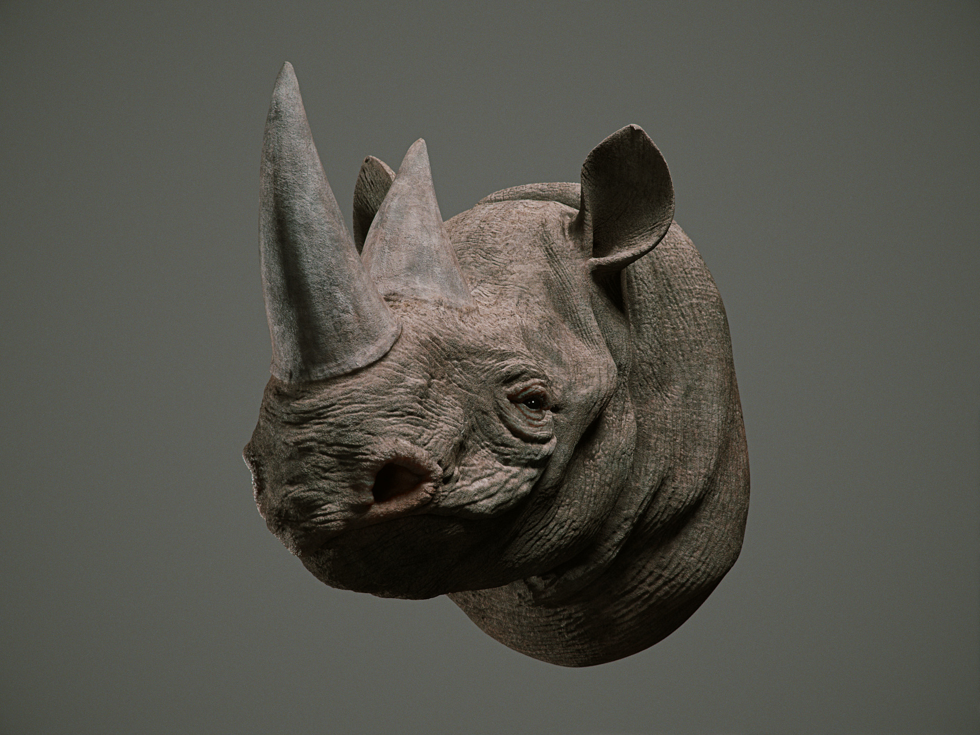 Cgmonkeyking rhino pn01 pp 0000