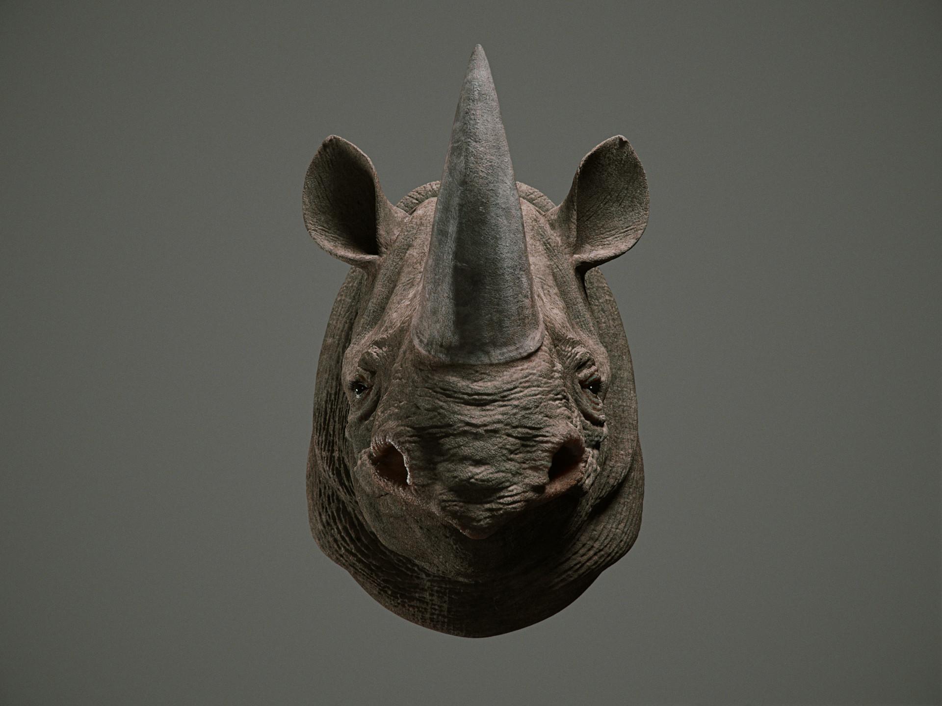 Cgmonkeyking rhino pn01 pp 0001