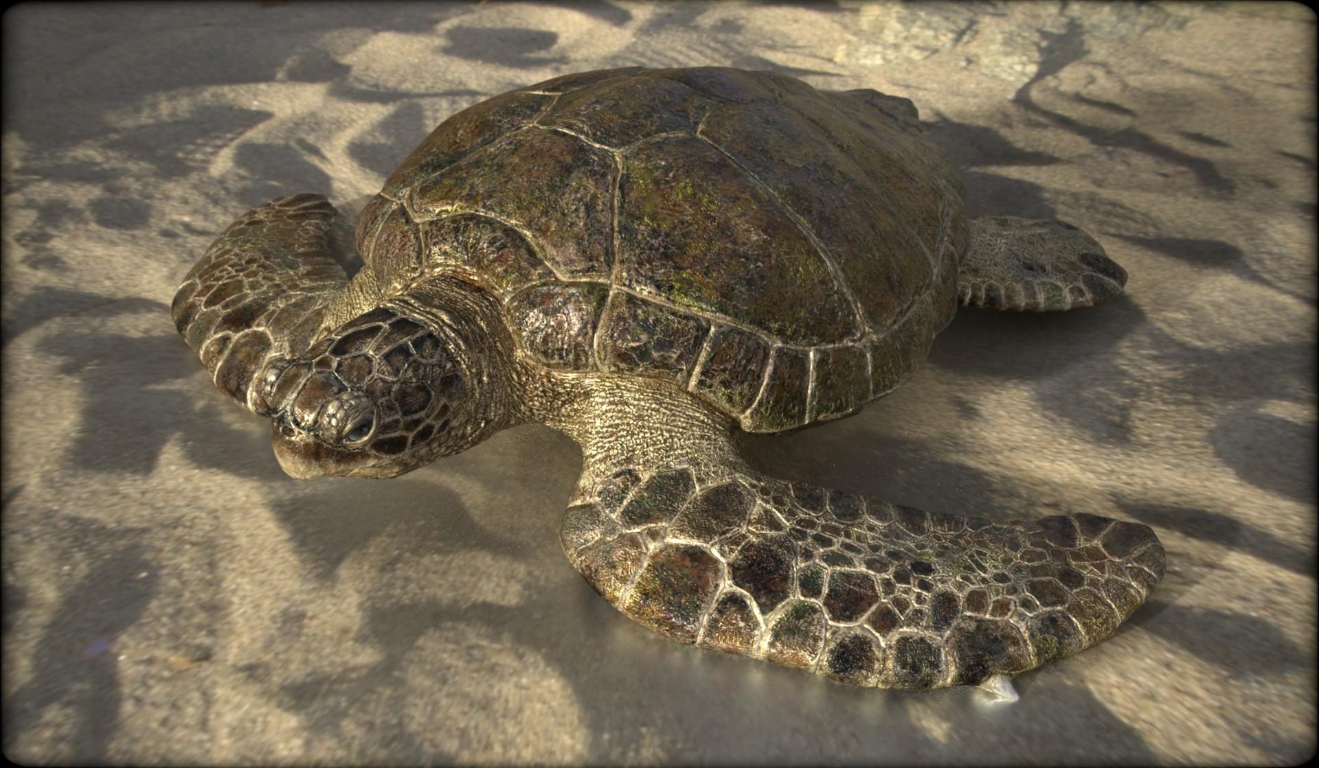 Vitamin imagination turtle2