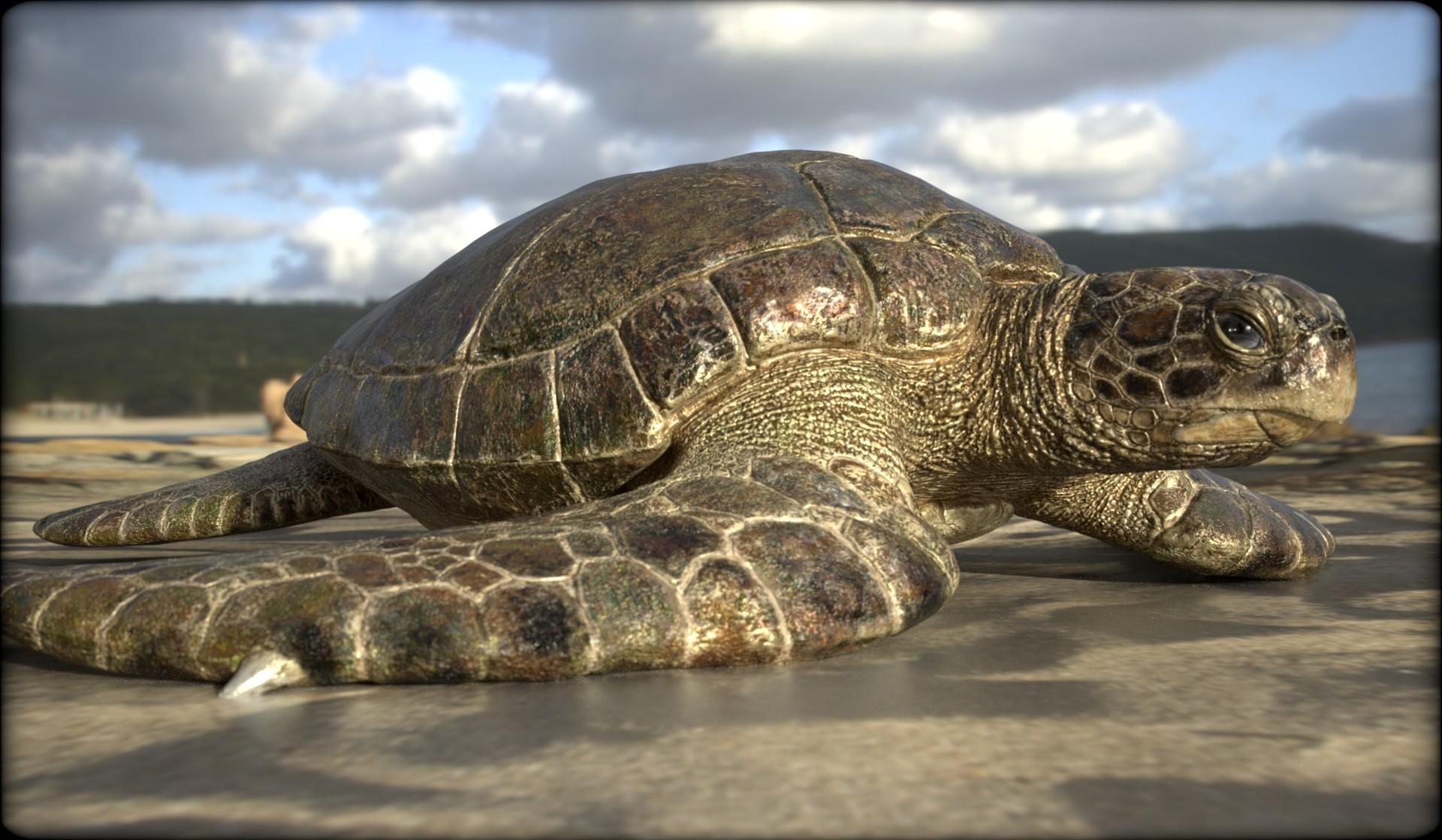 Vitamin imagination turtle3