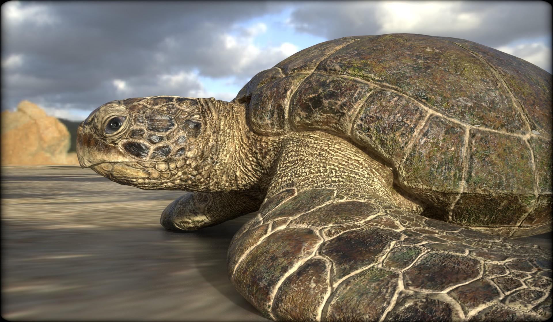 Vitamin imagination turtle5