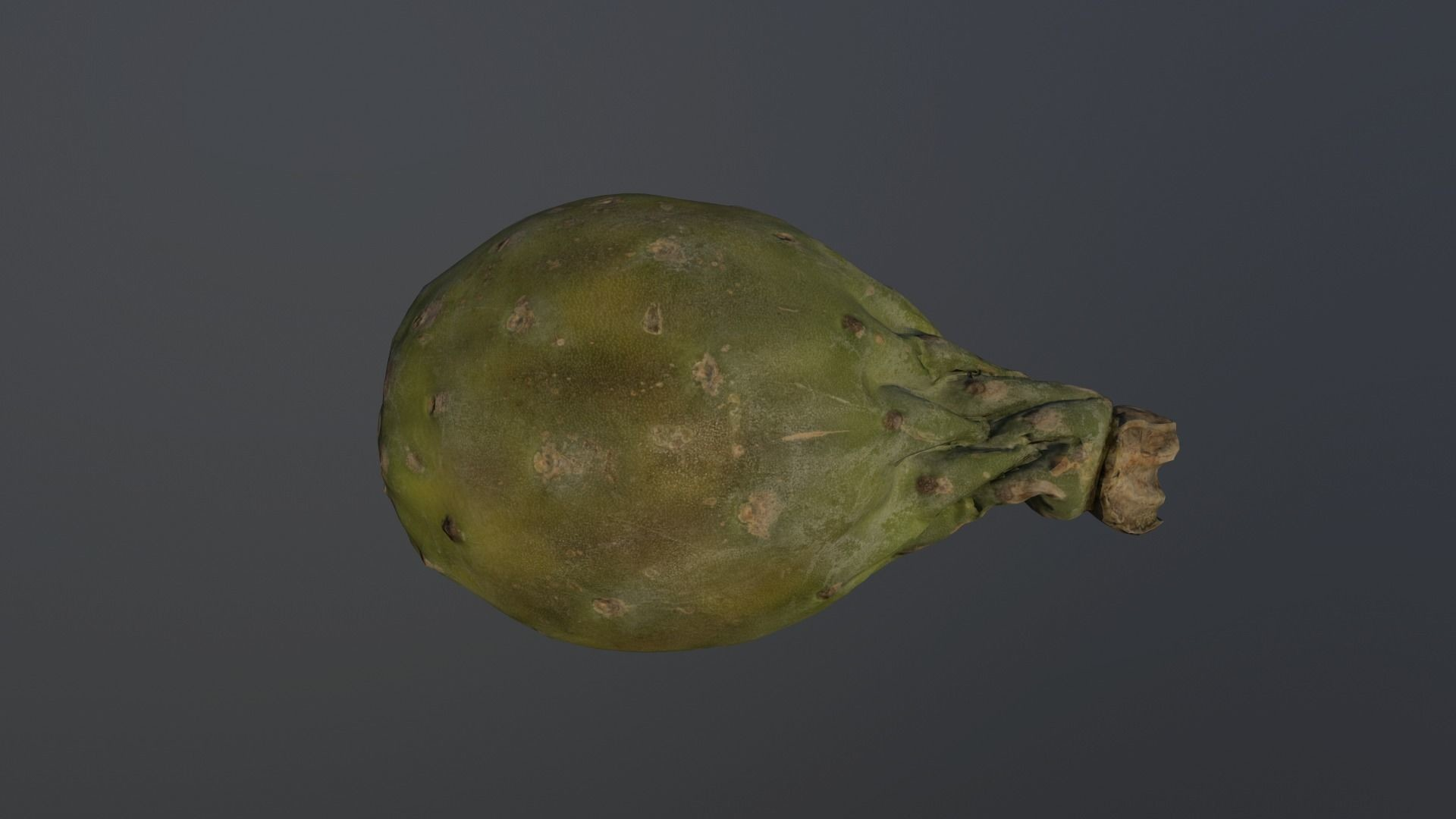 Carlos faustino opuntia ficus indica indian fig 3d model low poly obj 3ds fbx mtl