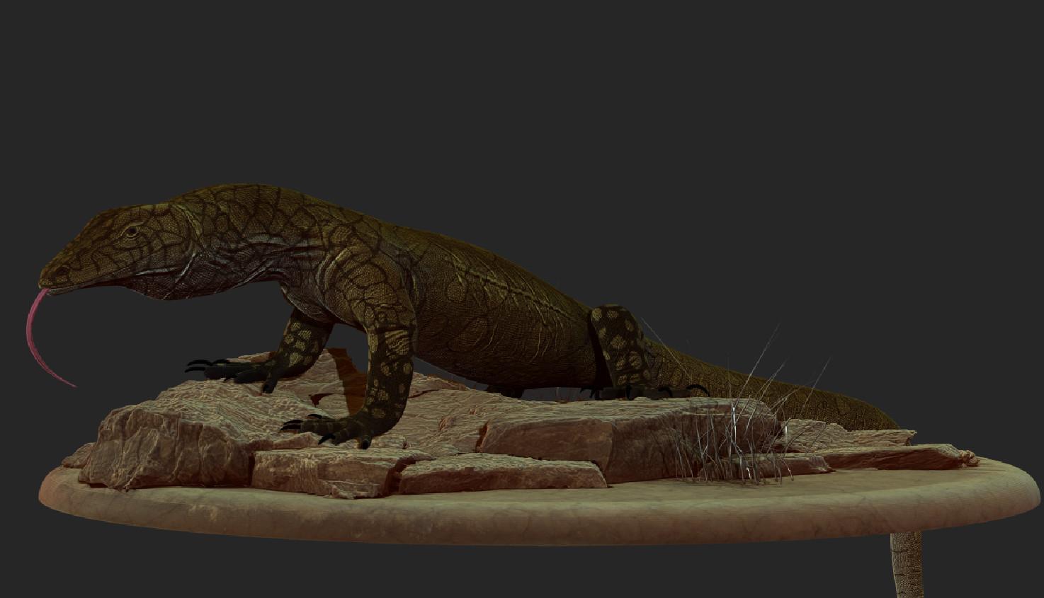 Perentie Lizard,