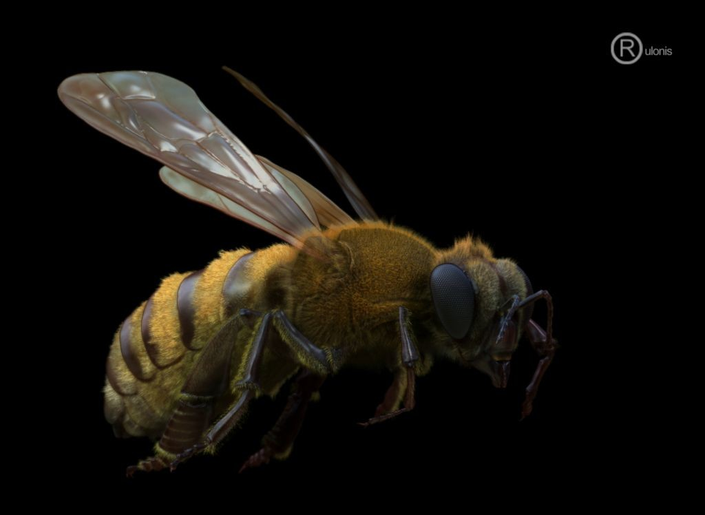 Dariusz andrulonis 1 bee