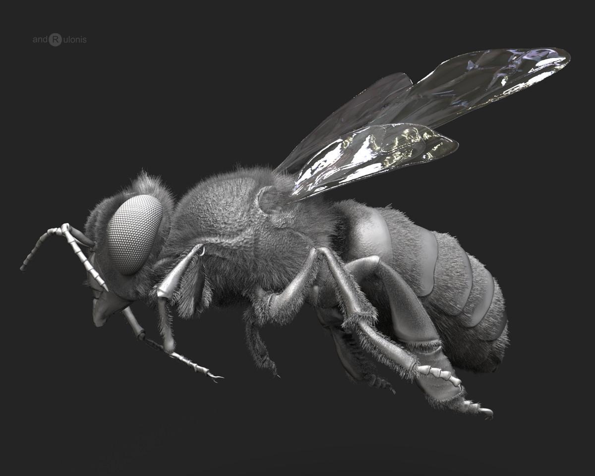 Dariusz andrulonis 2 bee