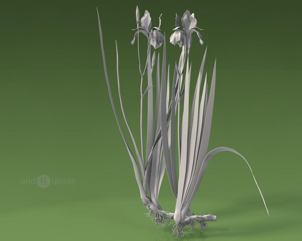 Dariusz andrulonis 3 iris white