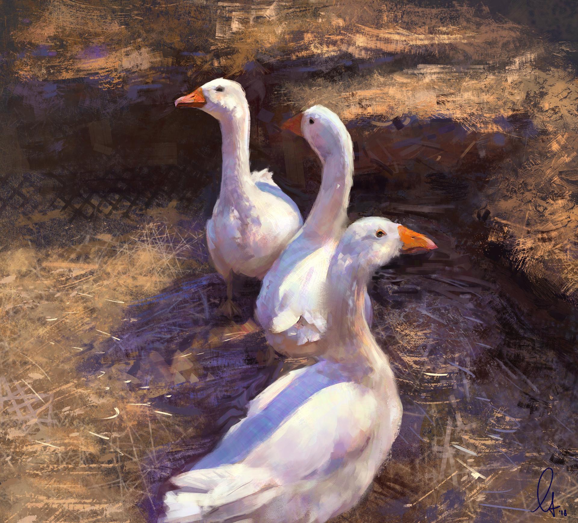 Mandy jurgens geese