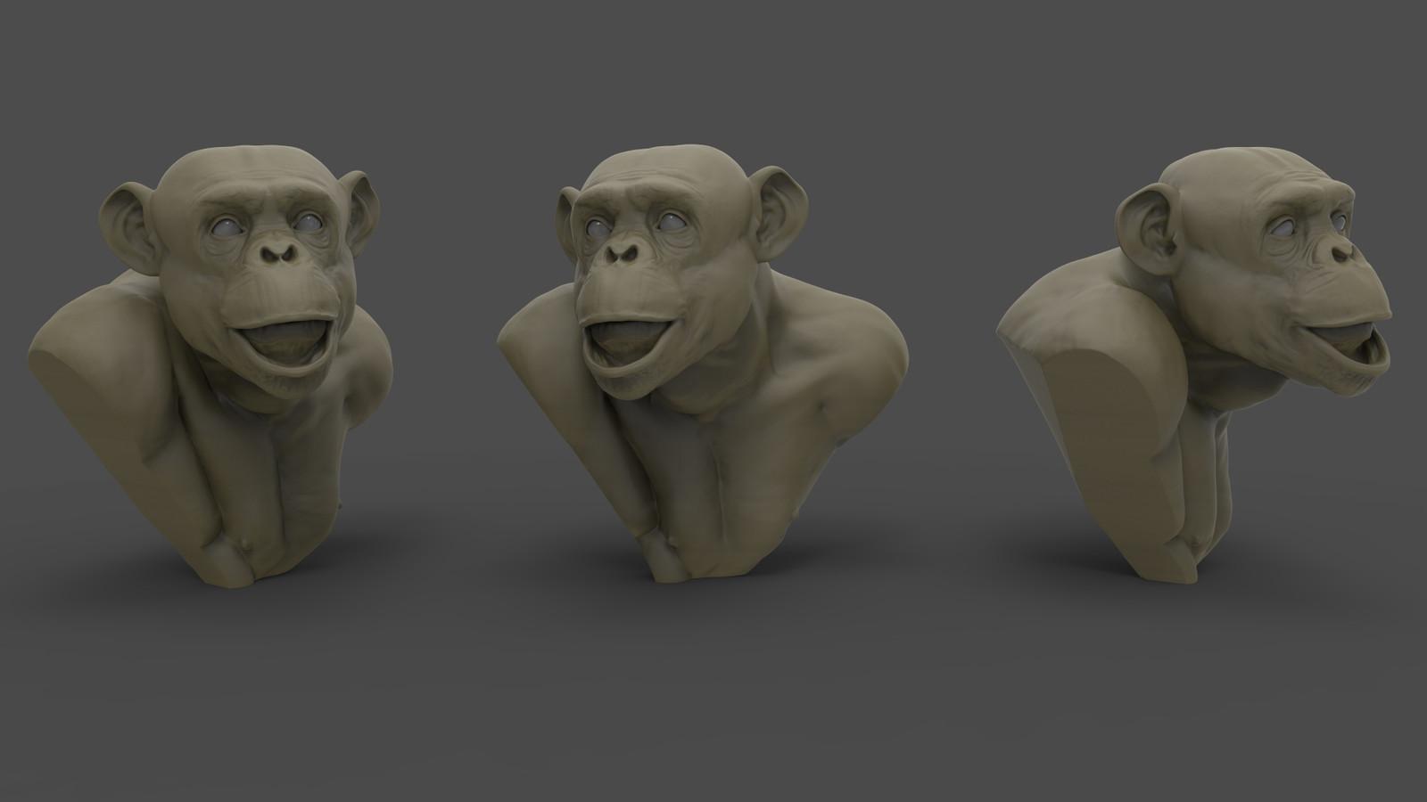 Chimpanzee Study