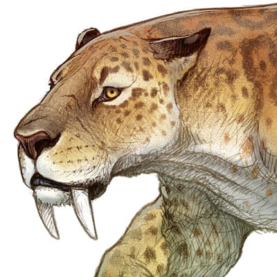 Fred wierum smilodon