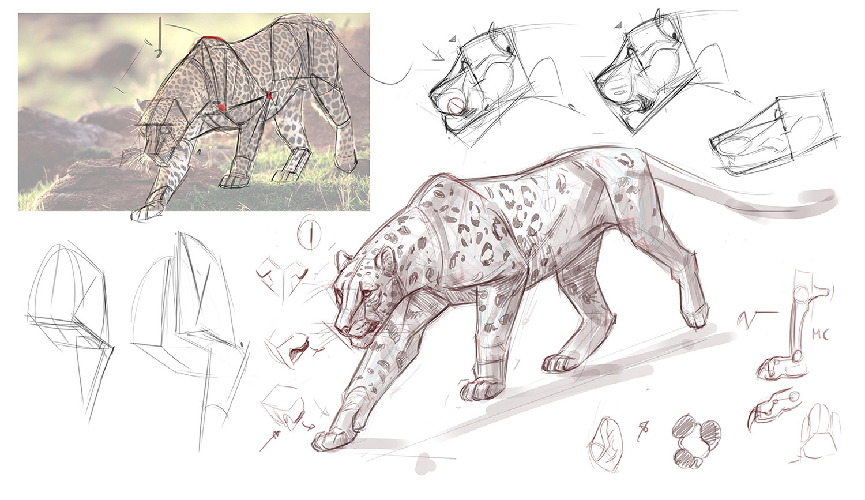 ArtStation - Foundation Art Group - Animal Anatomy - Construction ...