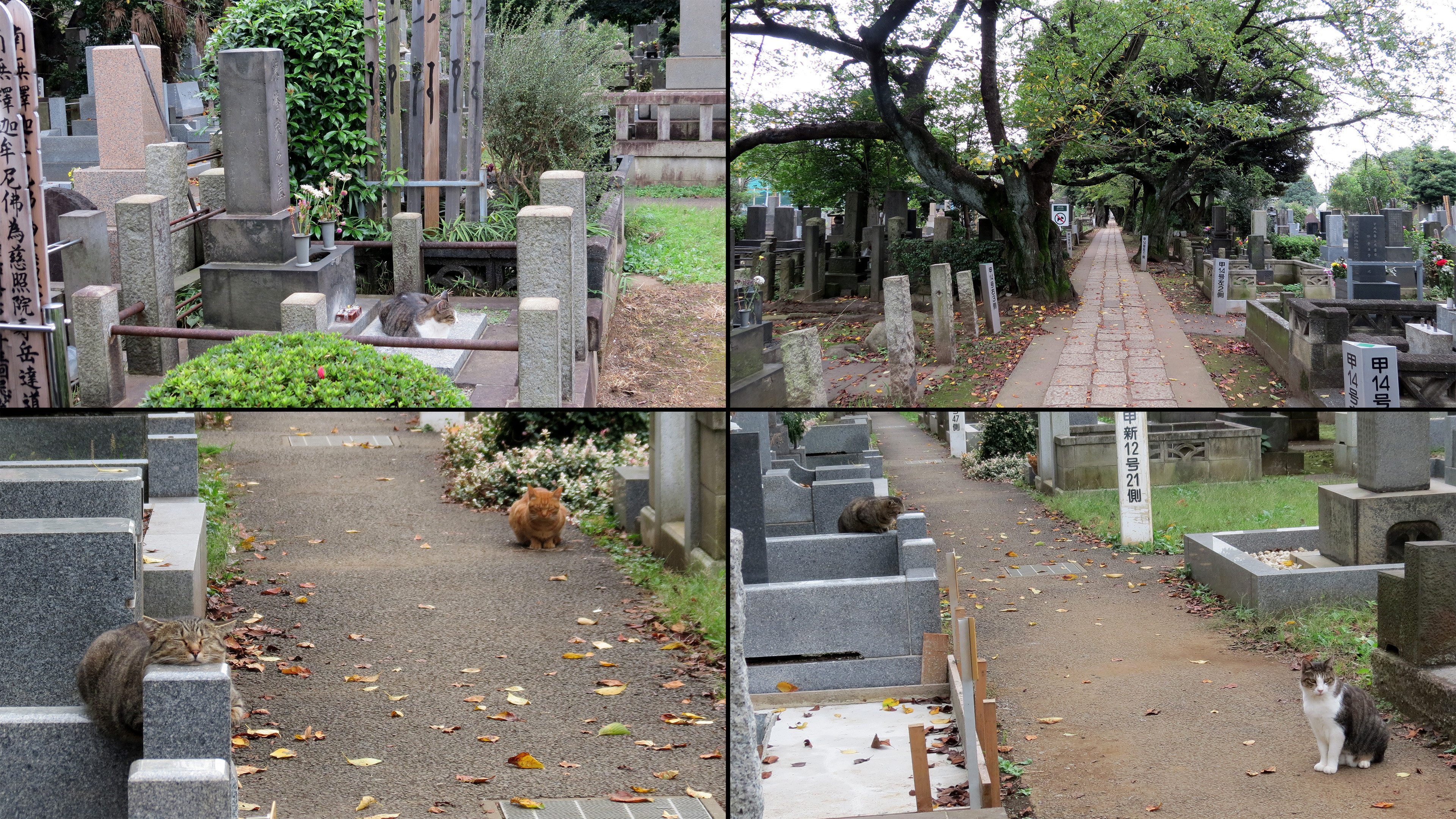 Reference Images I took in Tokyo!