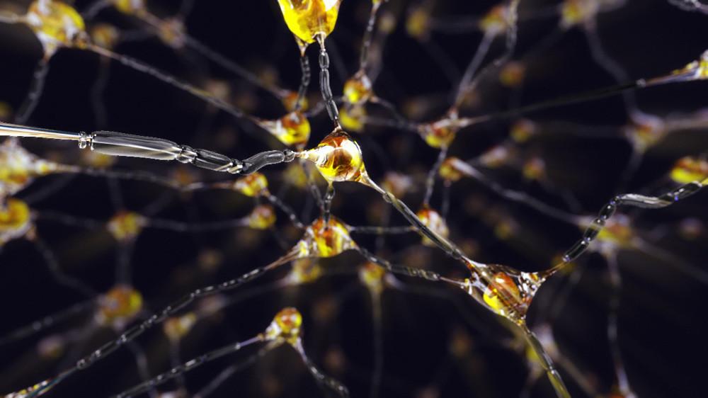 Anya allin neurons b00 1000 1000