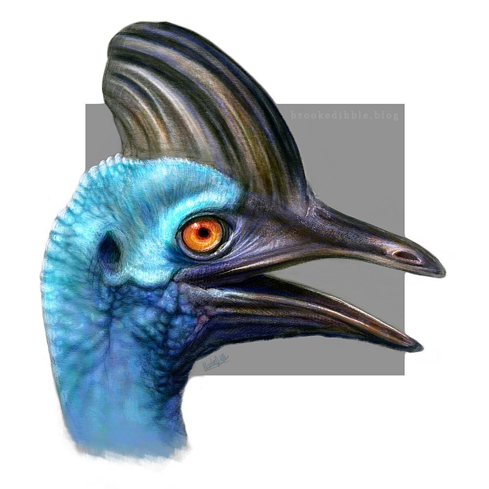 Sketch-a-day - Birds