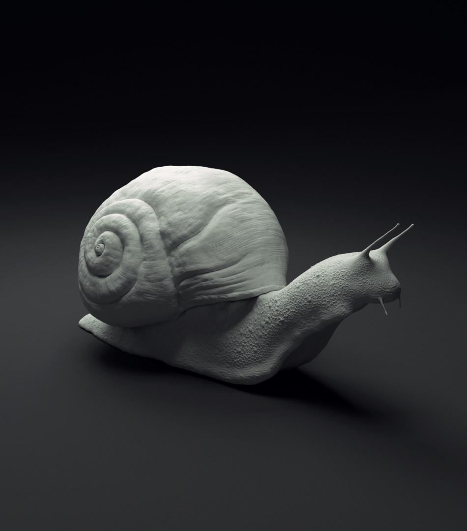 David sanchez snail 02