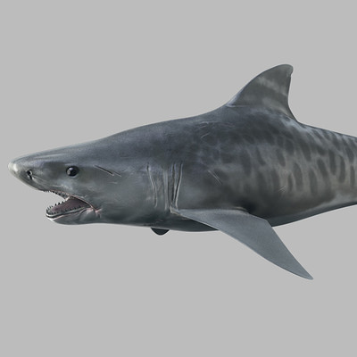Serhii orlov shark render 1