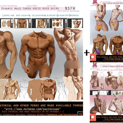 Sakimi chan dynamic male torso guide promo 02 package