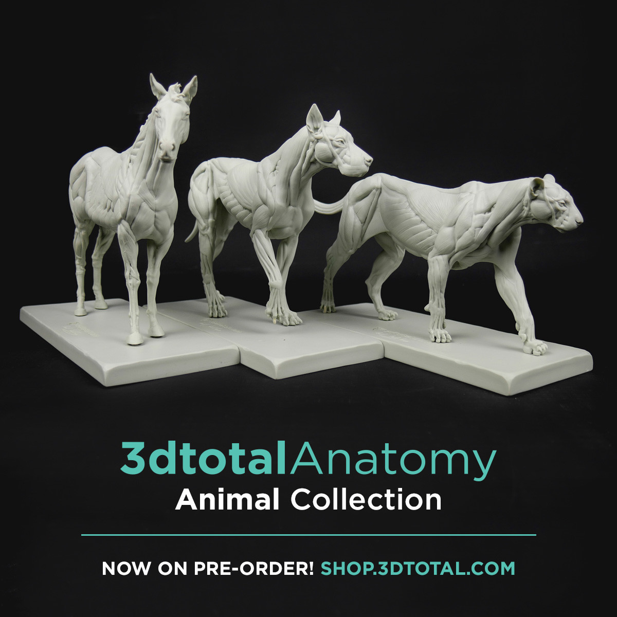 All the family (Equine, Canine and Feline) : https://shop.3dtotal.com/3dtotal-anatomy-3-piece-set-of-animal-figures.html