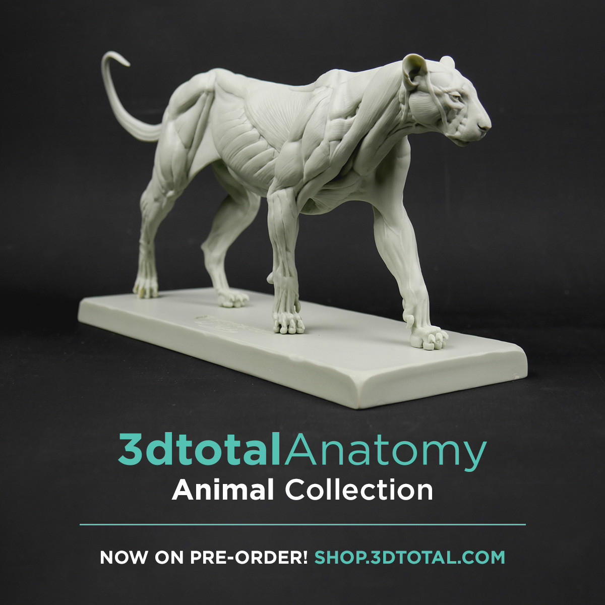 If you want to order the Feline ecorche : https://shop.3dtotal.com/3dtotal-anatomy-feline-figure.html
