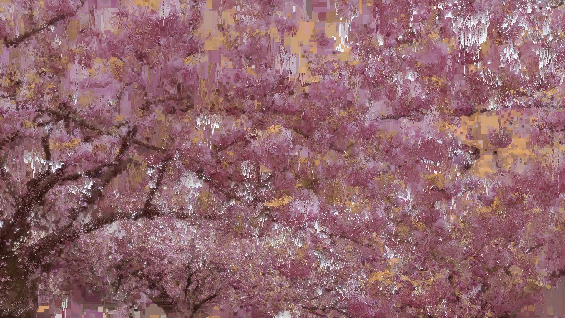 Benjamin bardou fleurs de cerisier i 00335