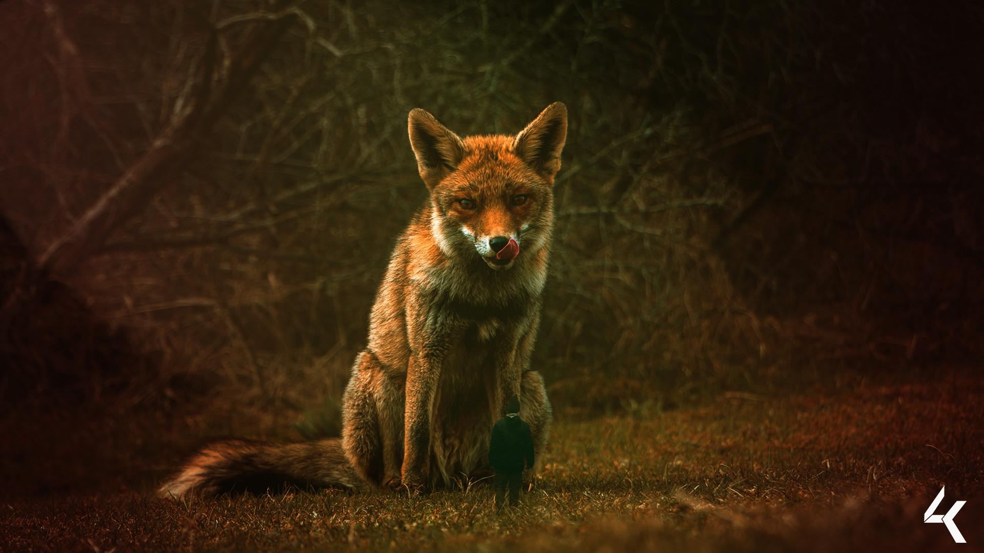 Lukas groh great fox