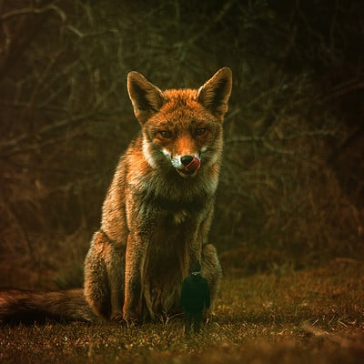 Lukas groh great fox