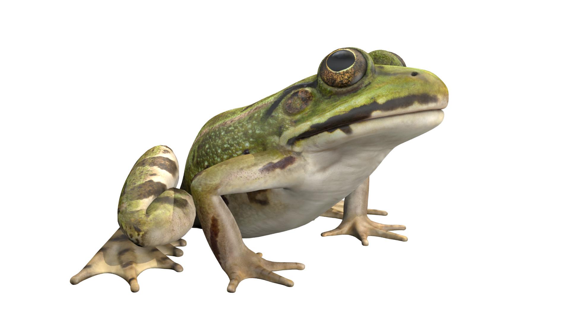 Alan kichl frog