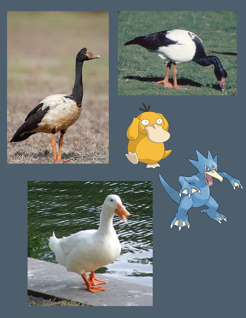 Raph lomotan duckref