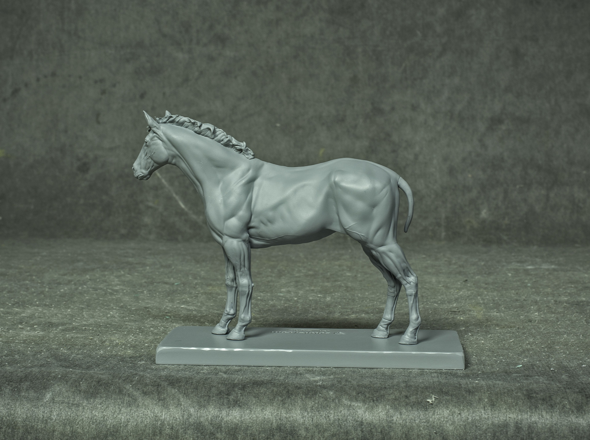 Gael Kerchenbaum - Green - Quarter Horse ecorche 3dtotal