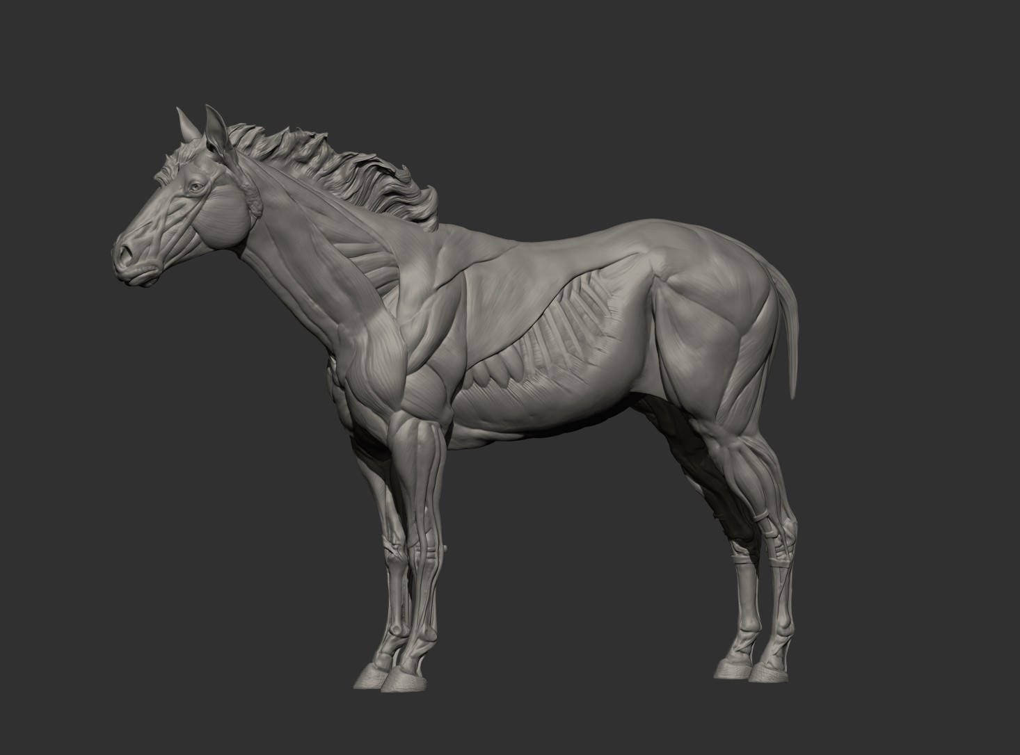 Getting closer to a breed for more realism.