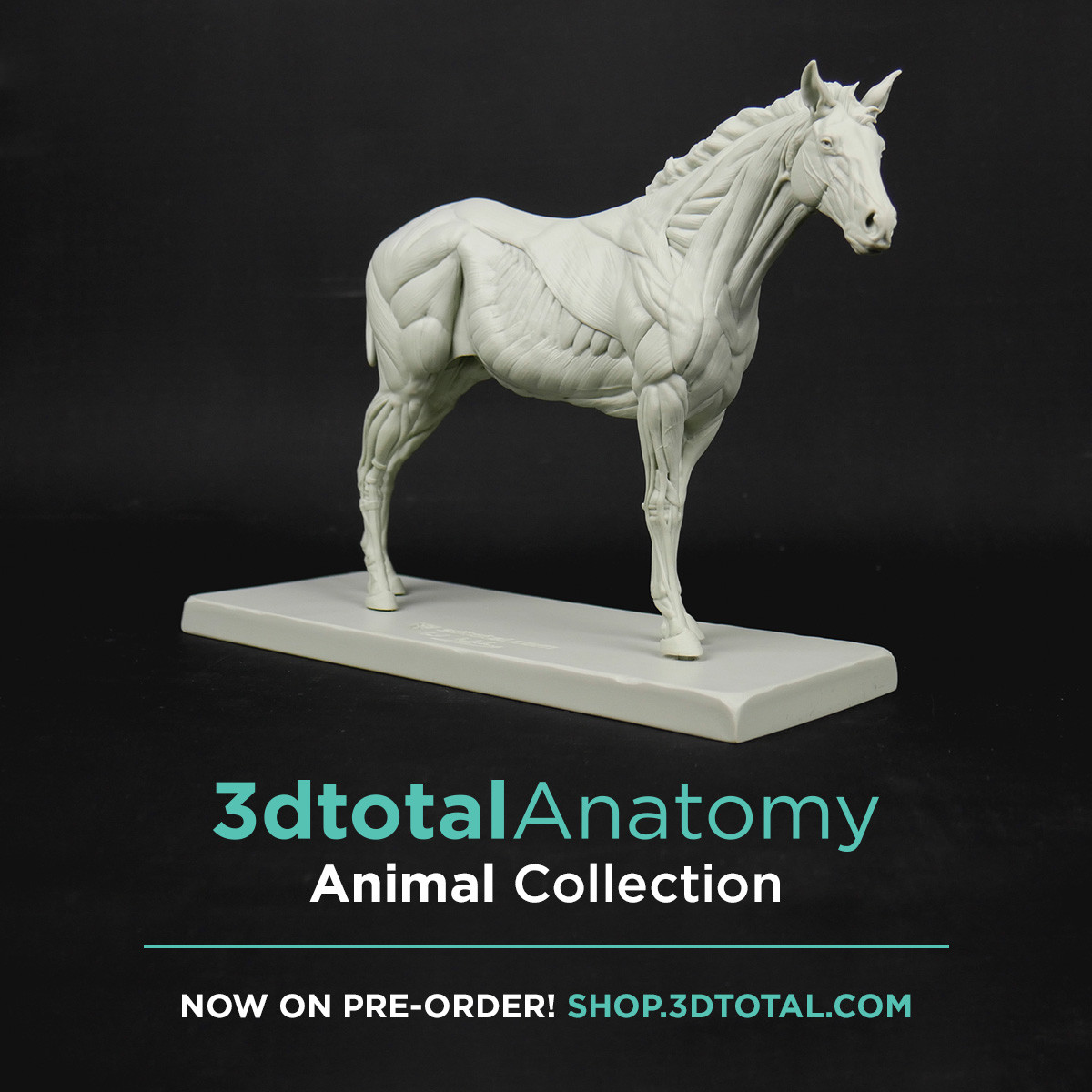 If you want to order the Equine ecorche :
