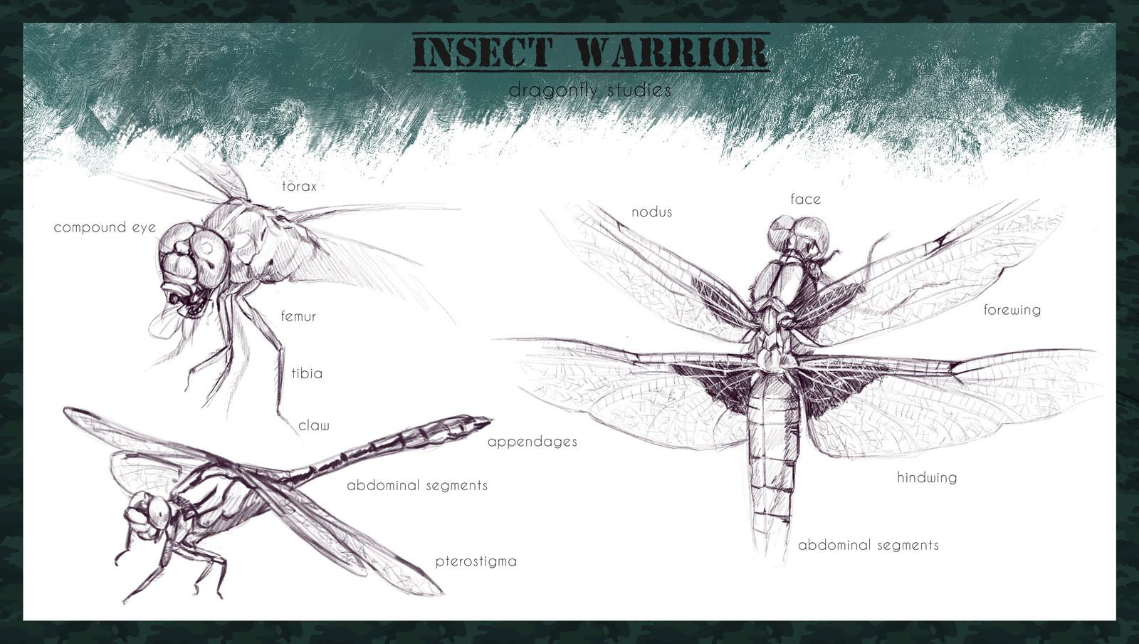 Dragonfly studies