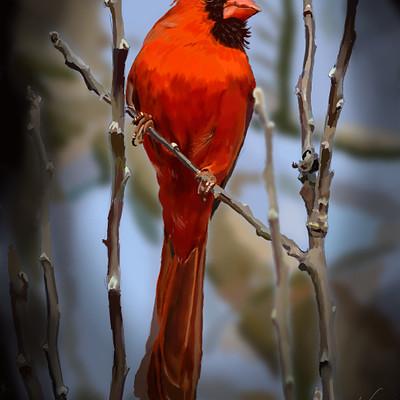Andre smith proud cardinal low rez