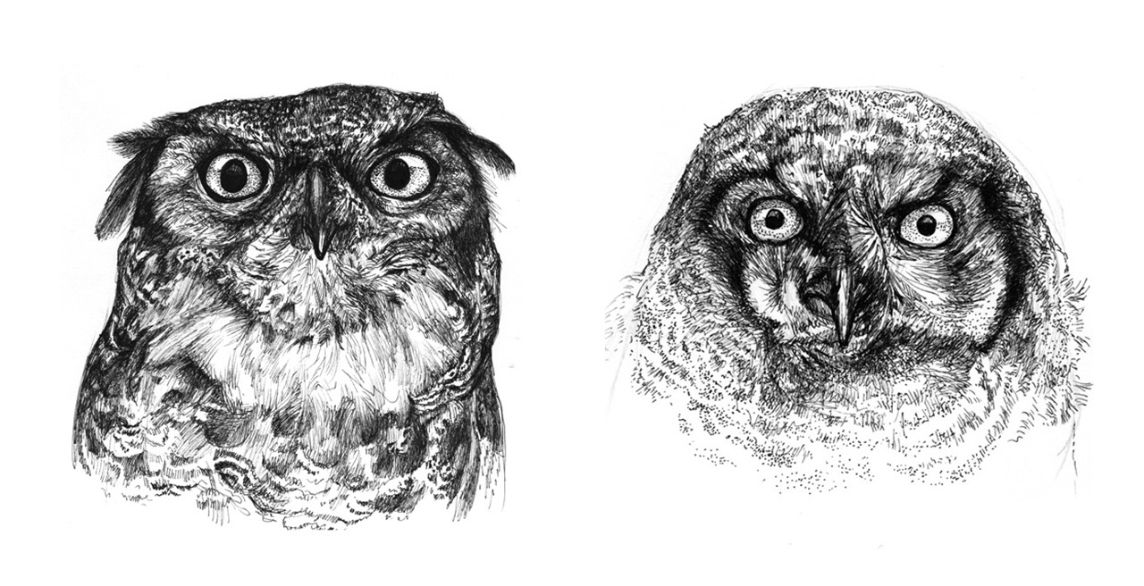 Ink sketches of specimens done on-site at Burke Museum