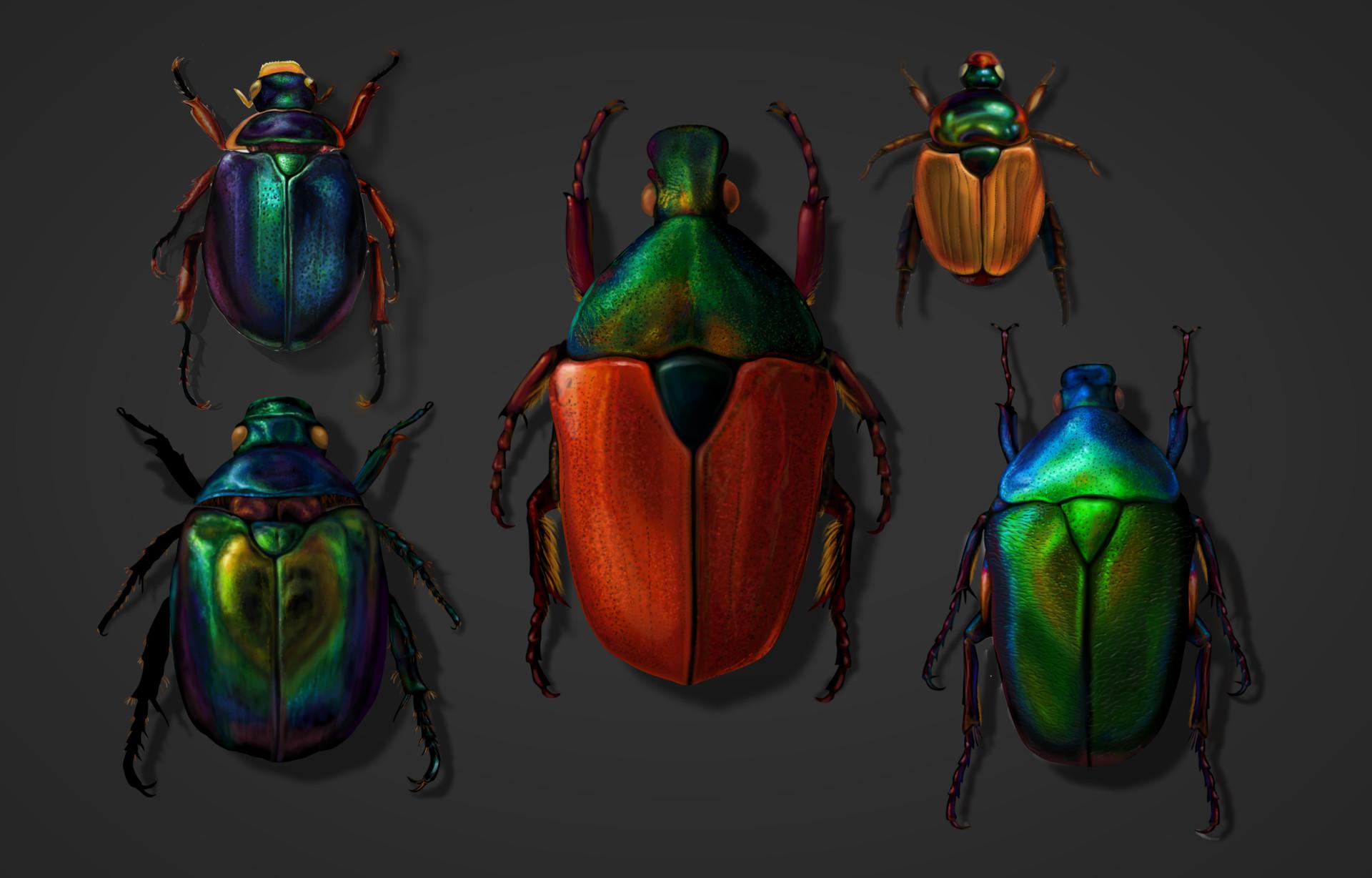 Alina godfrey beetle comp2