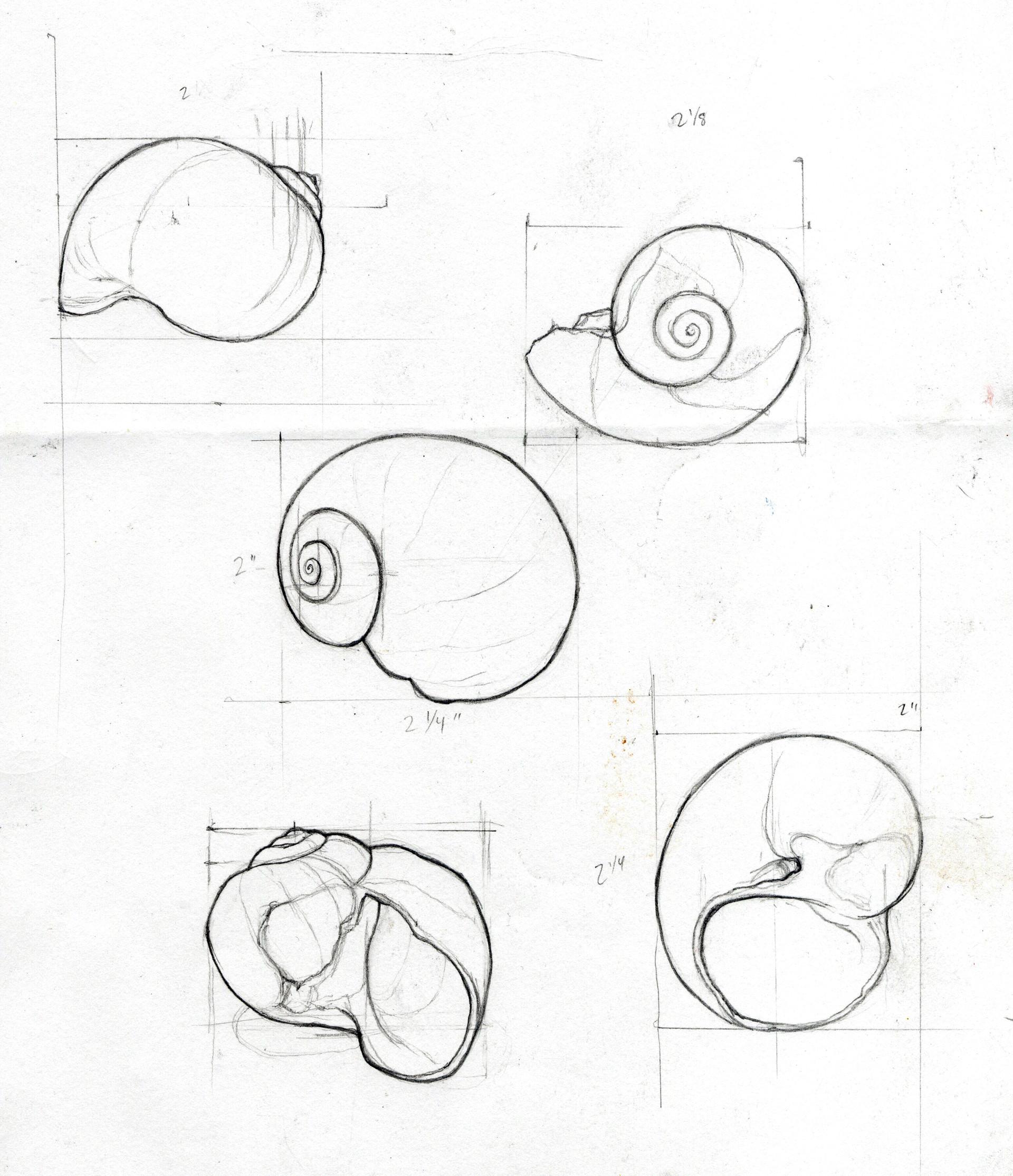 Alina godfrey shells