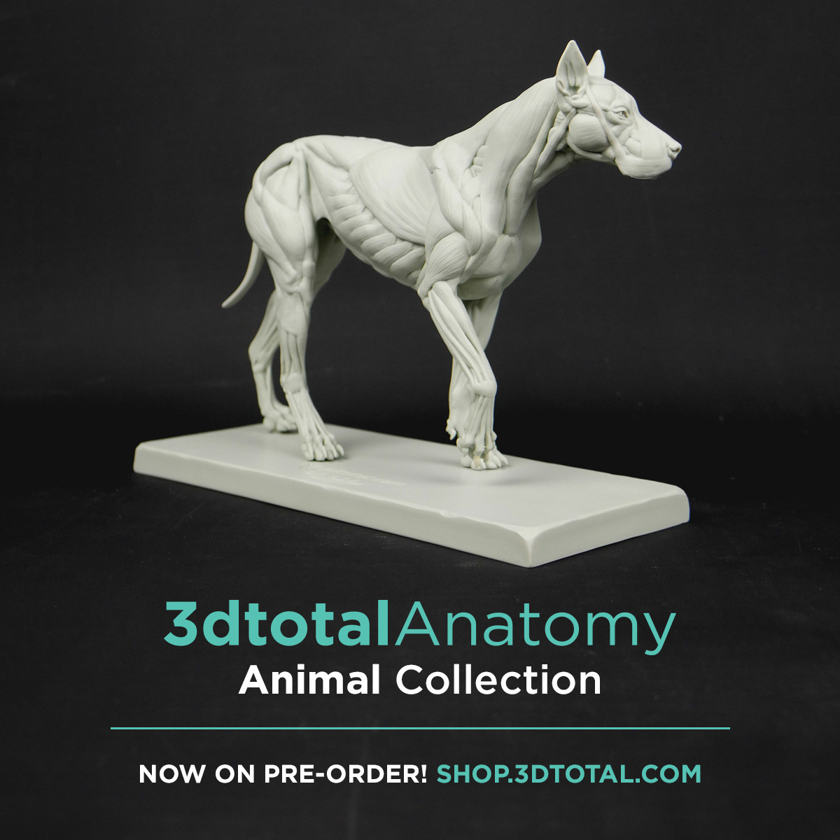 If you want to order the Canine ecorche :