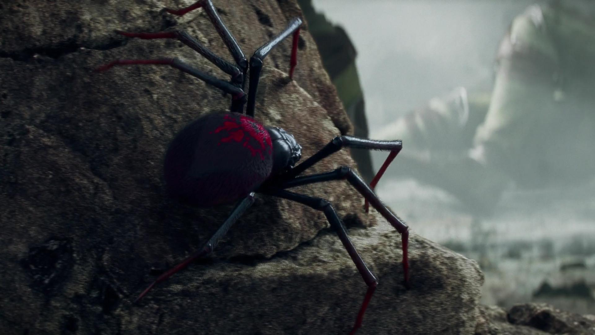 Amy ash spider