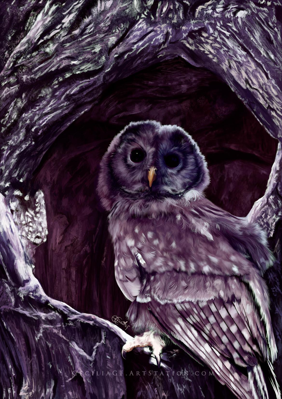 Cecilia g f owl