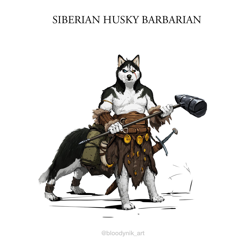 Nikita orlov husky barbarian