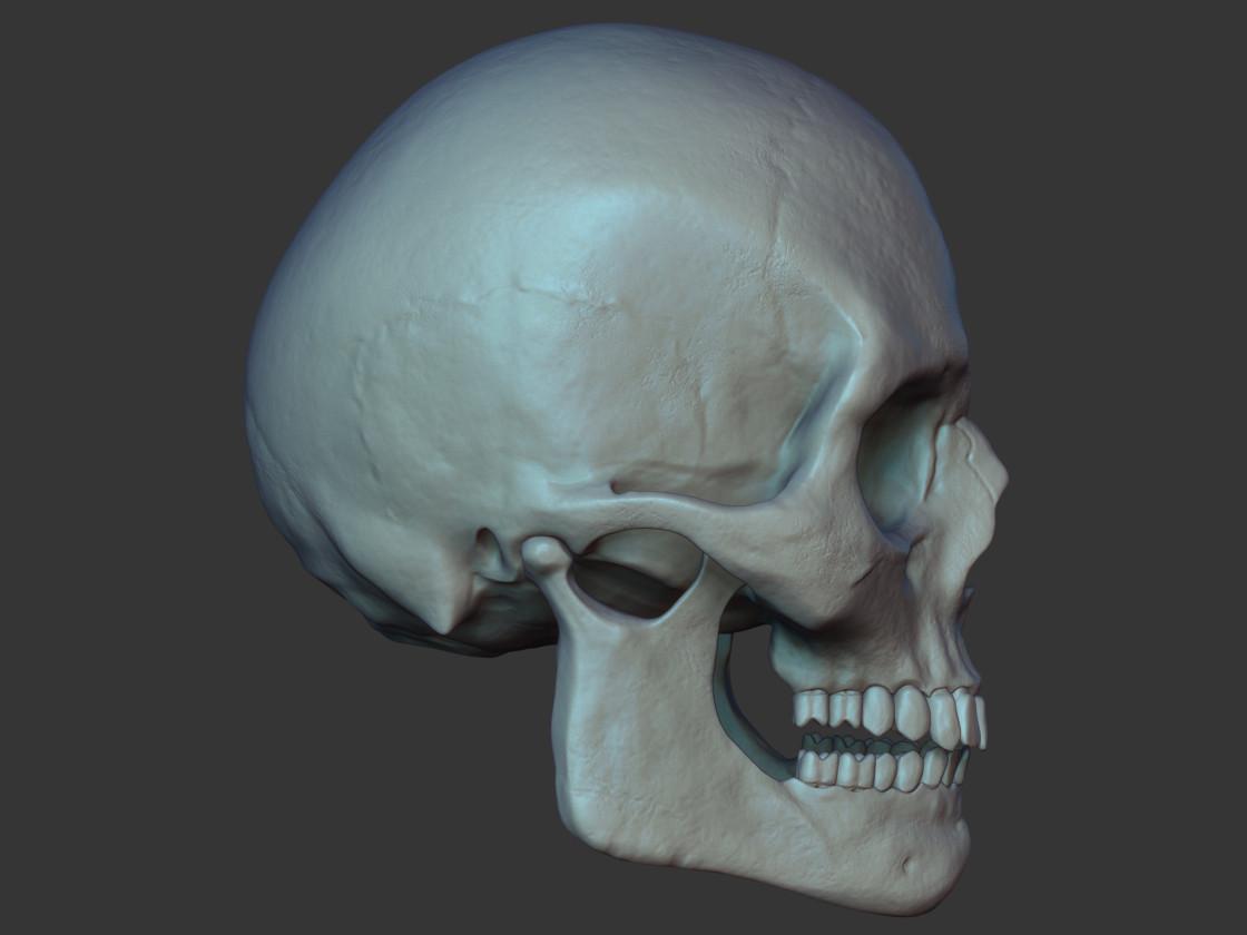 Marcos palante skullside