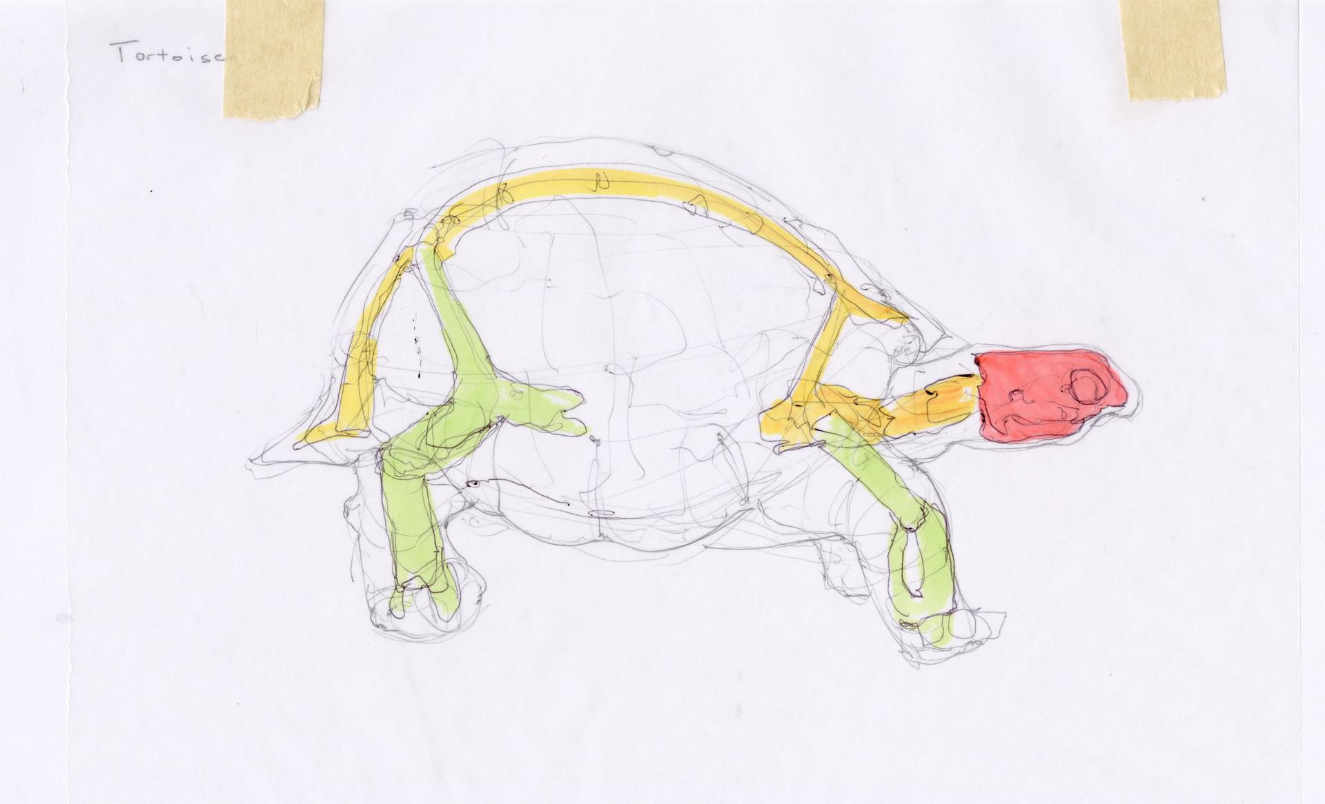 Madeline buanno skeleton01