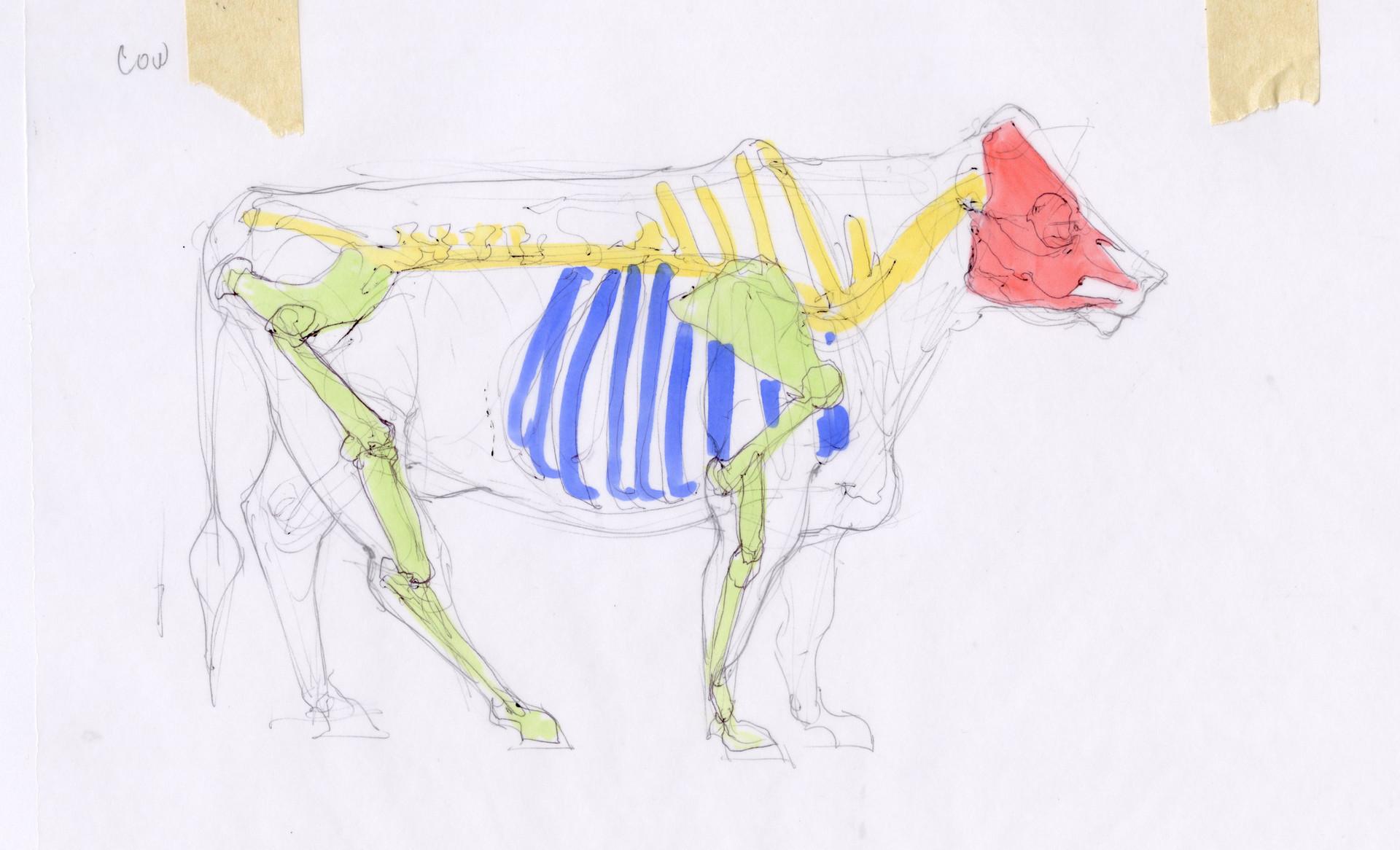 Madeline buanno skeleton02