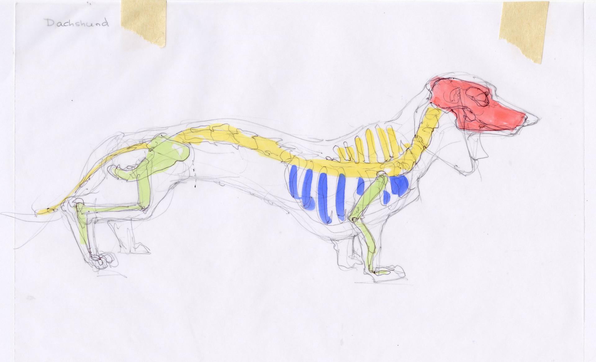 Madeline buanno skeleton07