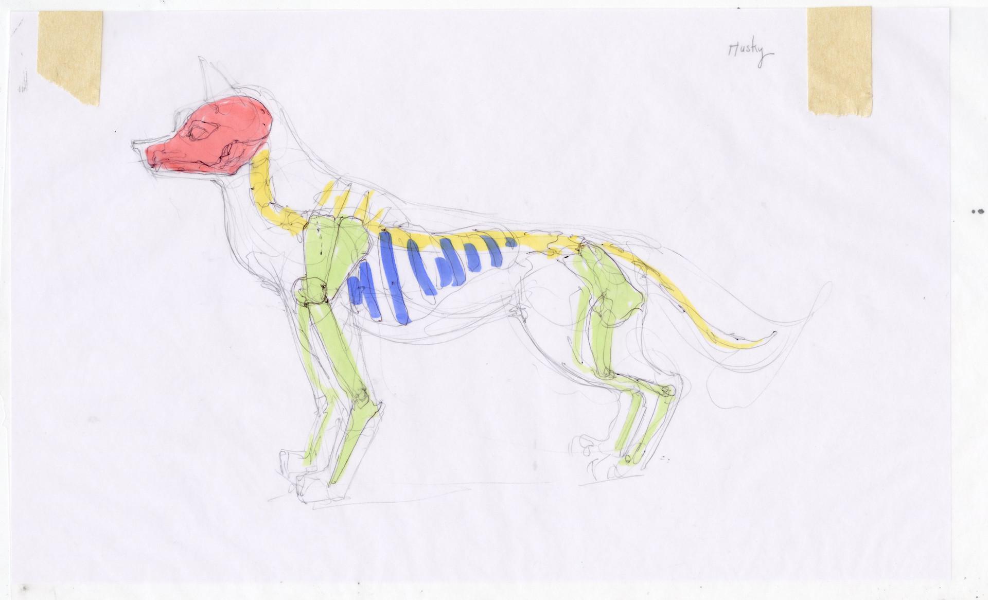 Madeline buanno skeleton18