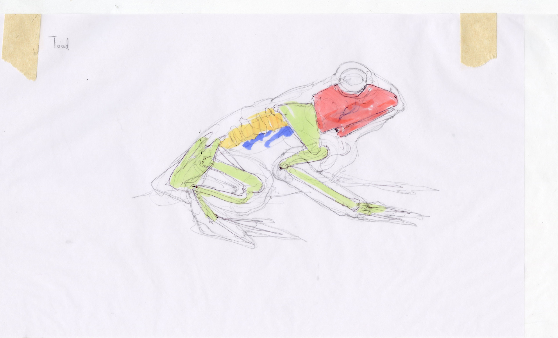 Madeline buanno skeleton19
