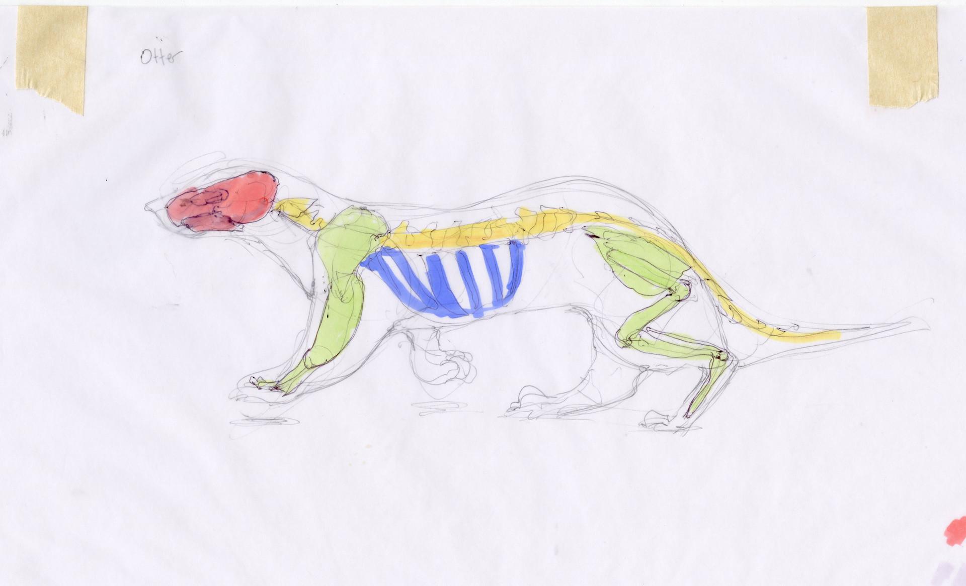 Madeline buanno skeleton20