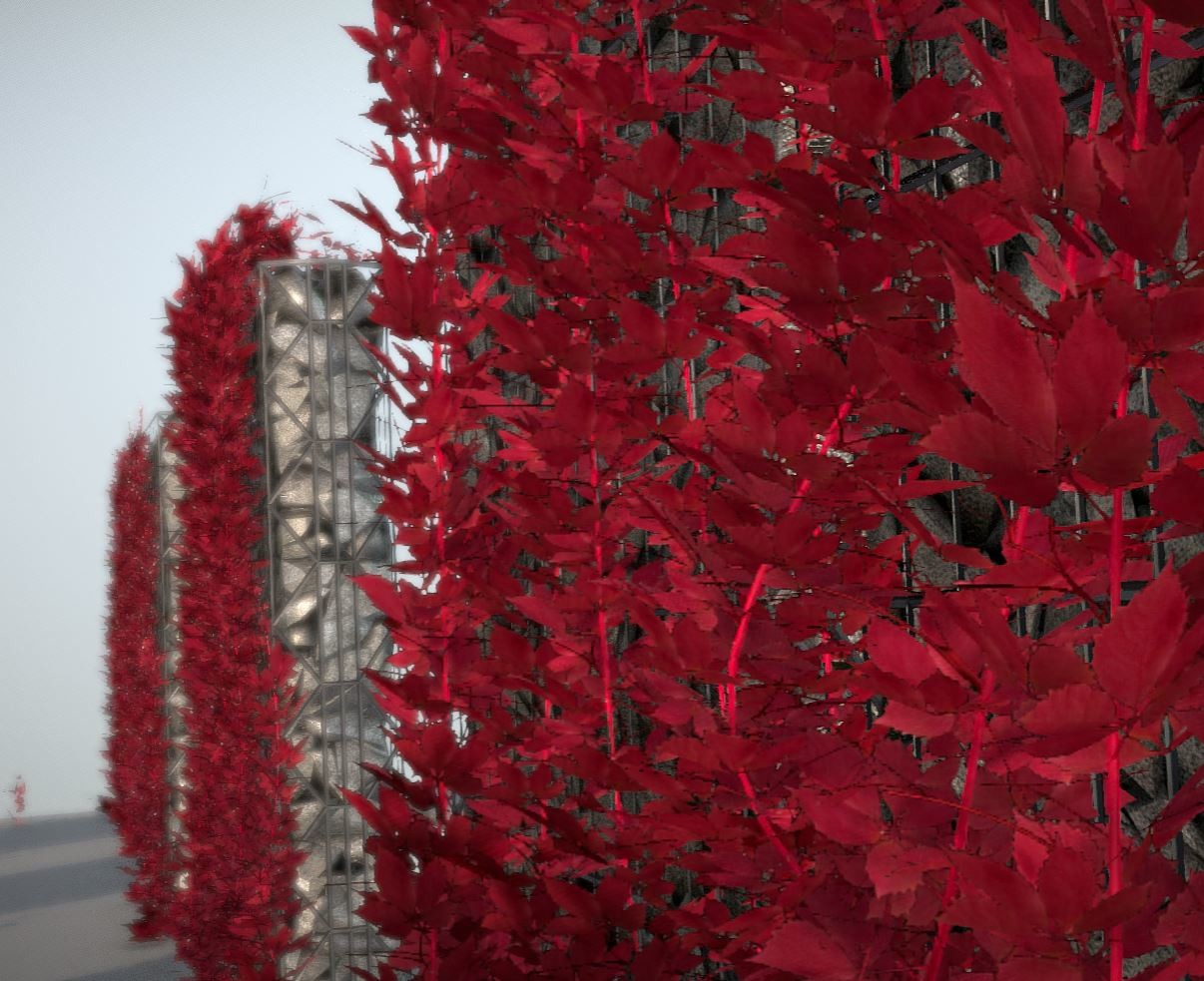 Vine in autumn on gabion walls