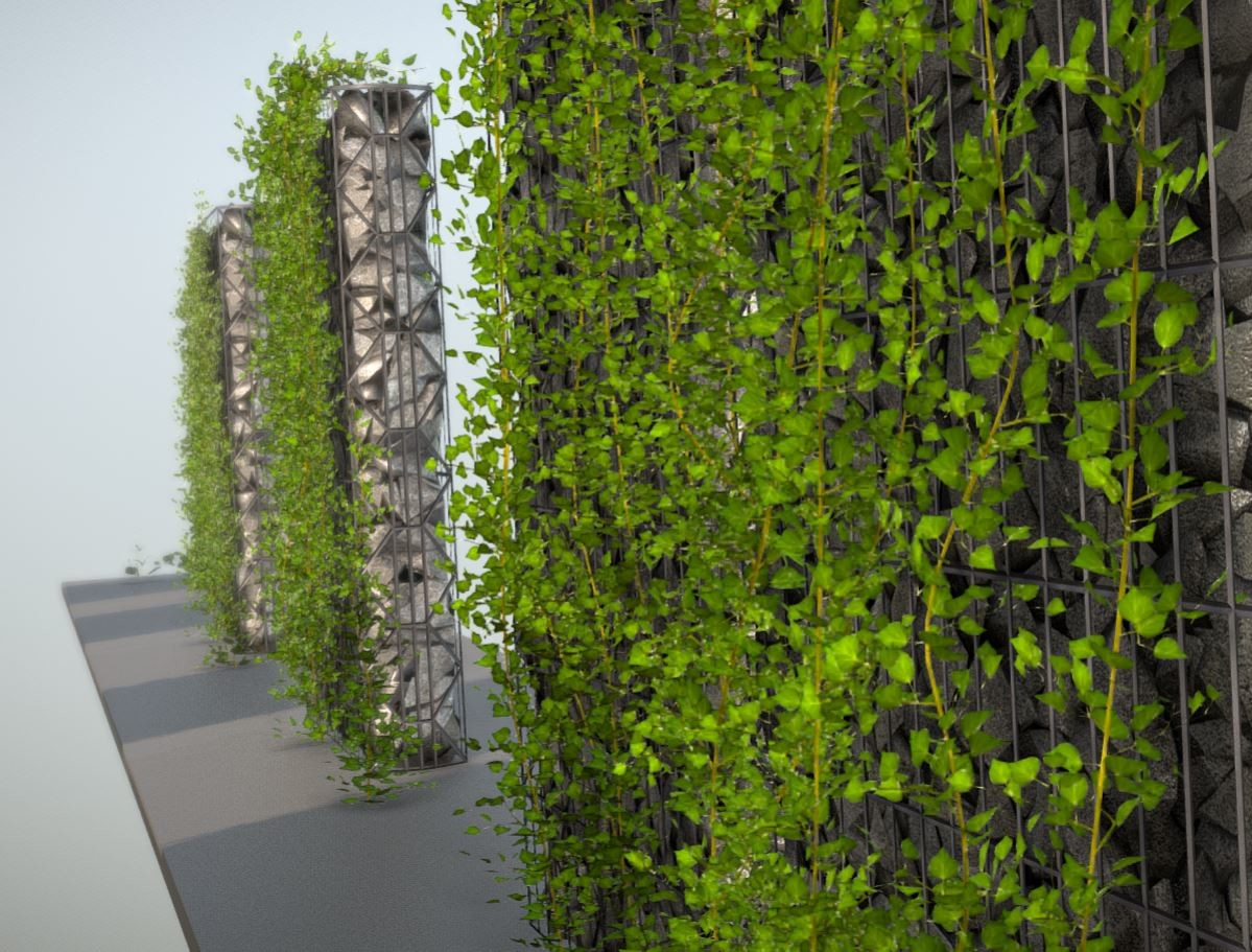 Ivy on gabion walls another perspective